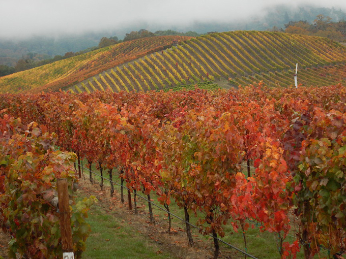Autumn Color in Southern Oregon's Abacela Vineyard