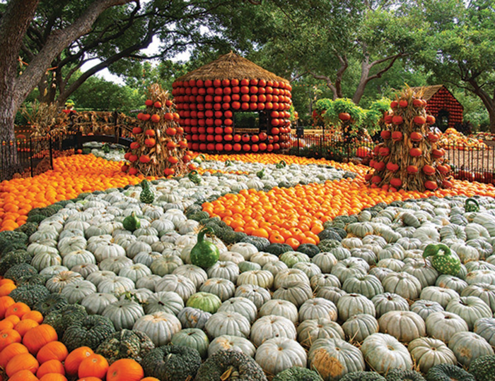 Fall Festival Highlights The Art of the Pumpkin
