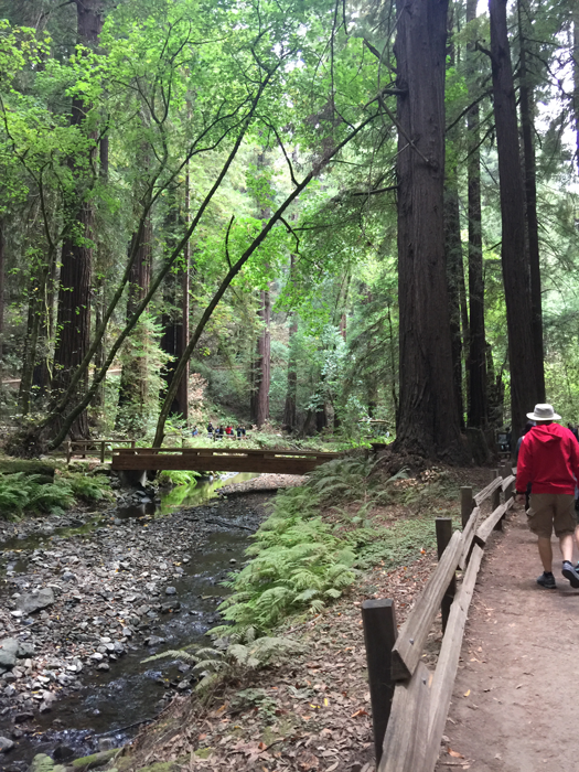 A Hike in an Ancient Forest